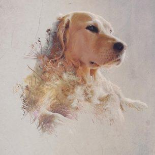 Double Exposure Digital Pet Portrait