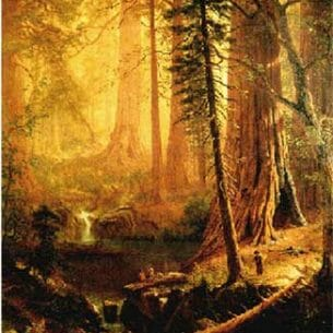 Bierstadt, Albert(USA): Giant Redwood Trees of California Oil Painting Reproductions