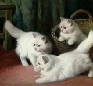 Arthur Heyer – Three White Angora Kittens Oil Painting Reproductions
