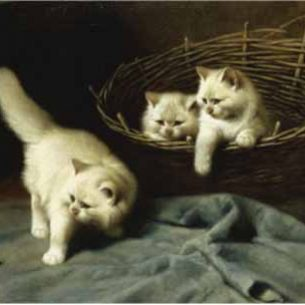 Arthur Heyer – White Angora Kittens with a Beetle Oil Painting Reproductions