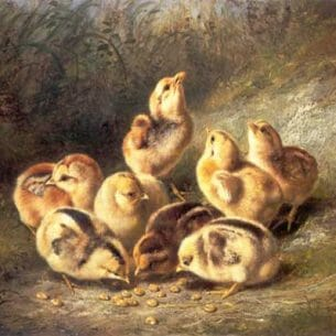 Arthur Fizwilliam Tait – Chickens and Chicks Oil Painting Reproductions