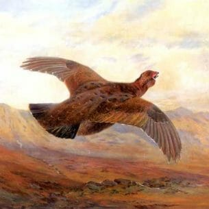 Archibald Thorburn – Red Grouse in Flight