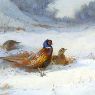 Archibald Thorburn – Cock and Two Hen Pheasants in Snow Oil Painting Reproductions