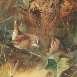 Archibald Thorburn – Wrens Oil Painting Reproductions