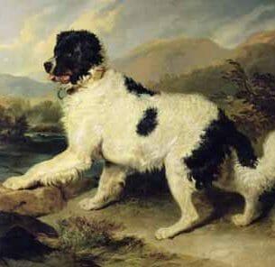 Edwin Henry Landseer – Newfoundland Dog Called Lion